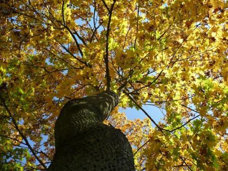autumn_leaves_197834 compressed