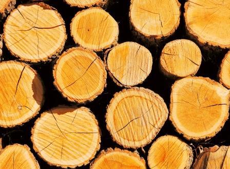 wood_2571x1894 compressed