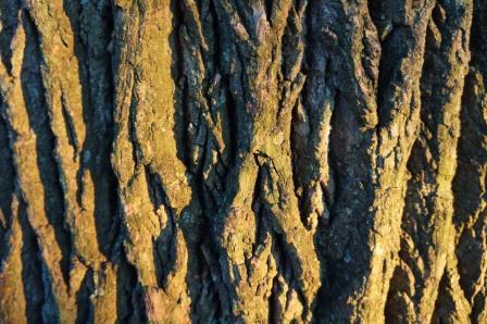 wood_tree_bark compressed