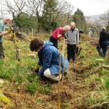 Tree Planting at Kilfinan